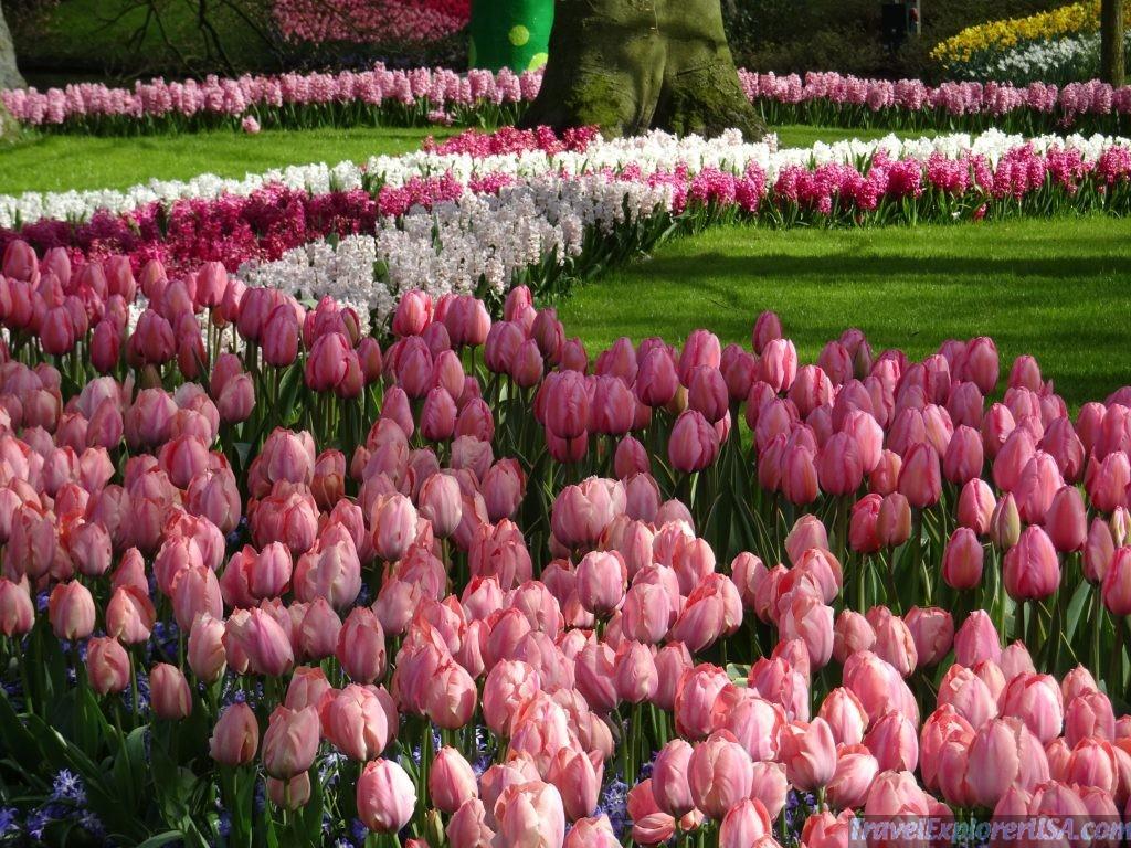 Keukenhof tulilp garden
