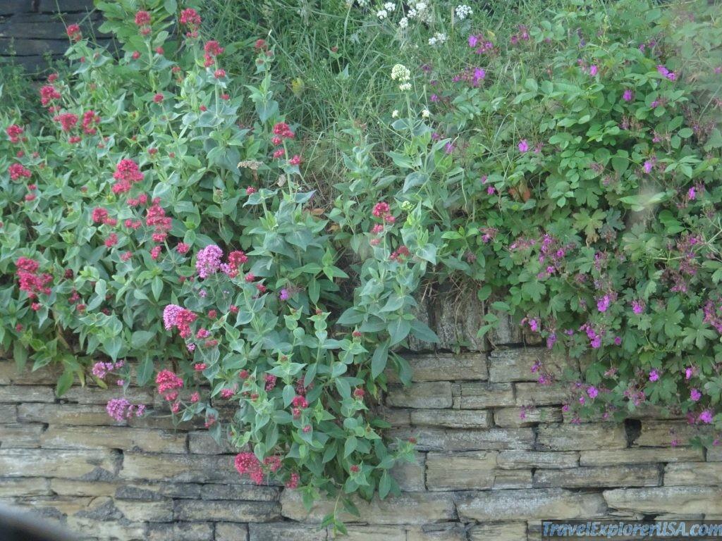 Flowers of the United Kingdom